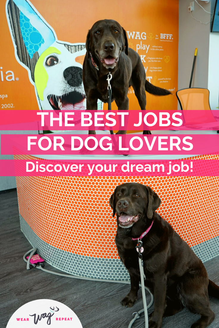 The best jobs for dog lovers