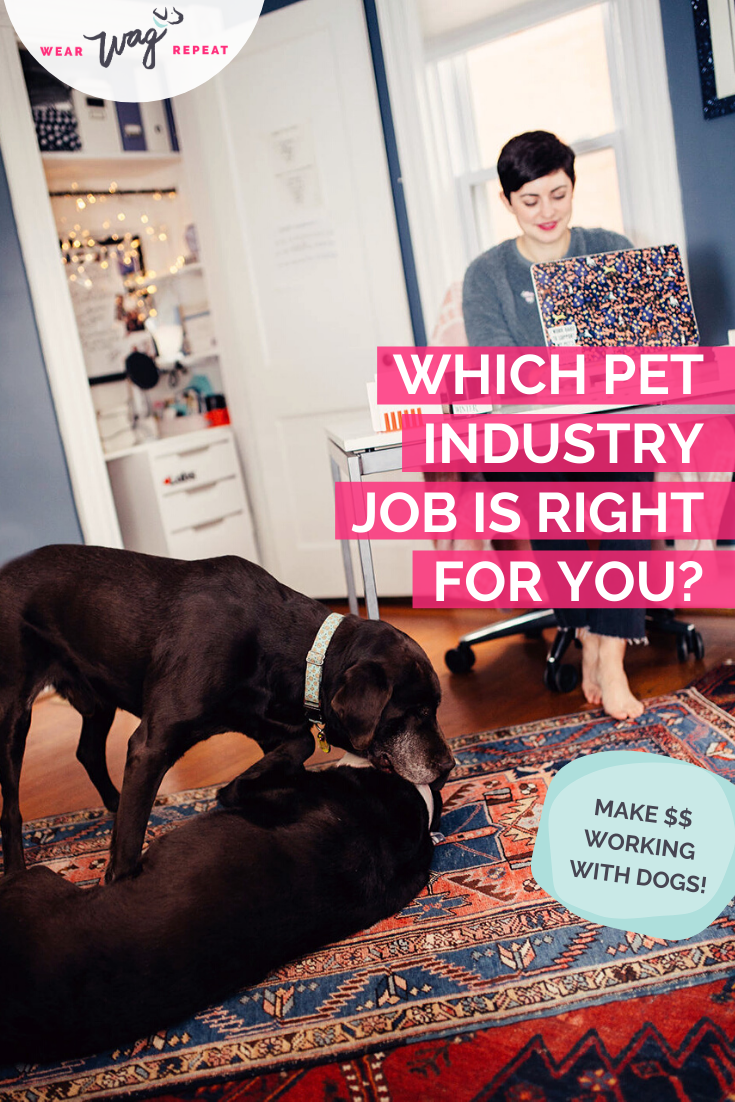 which pet industry job is right for you