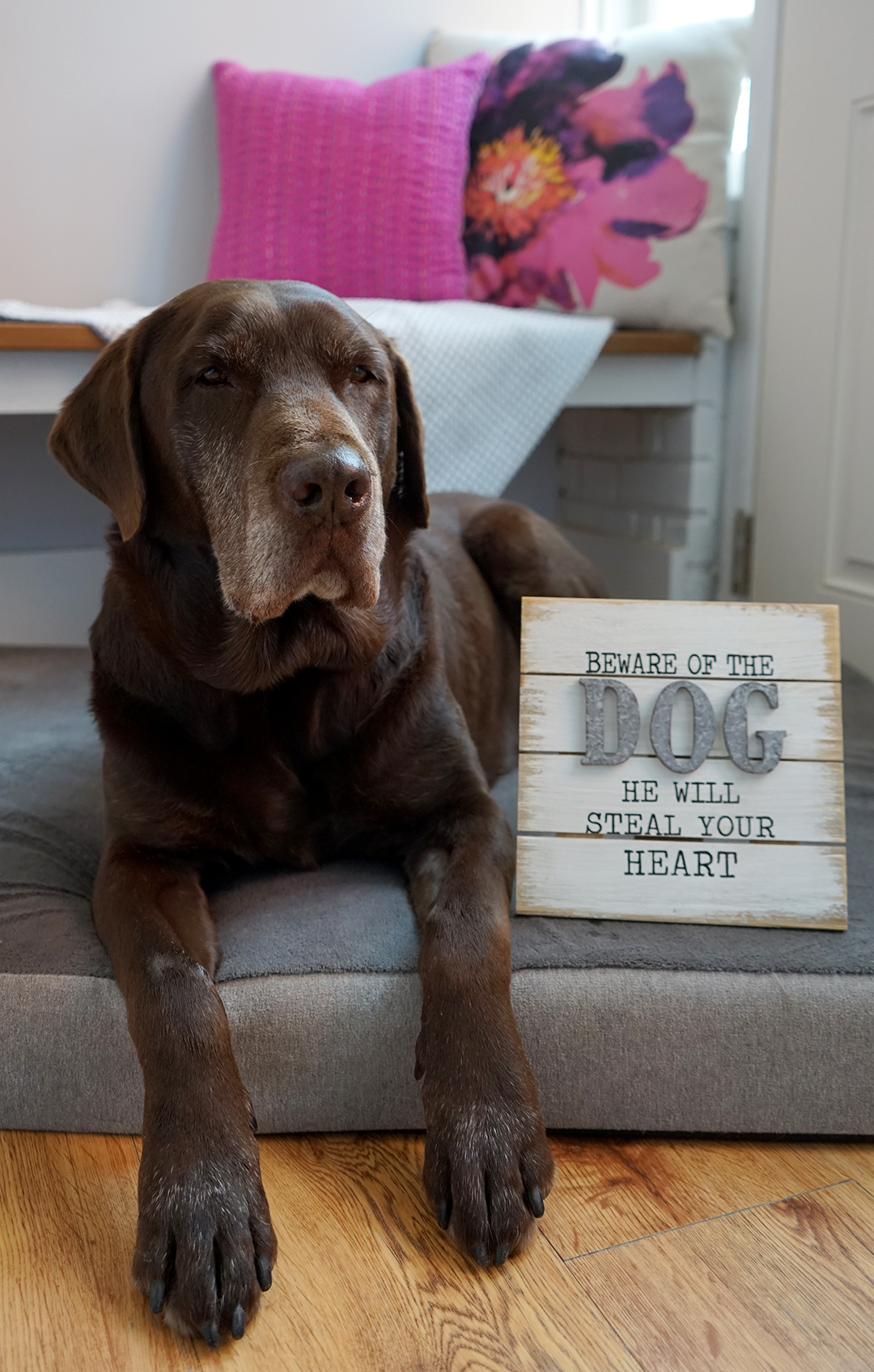 dog decor sign from tuesday morning