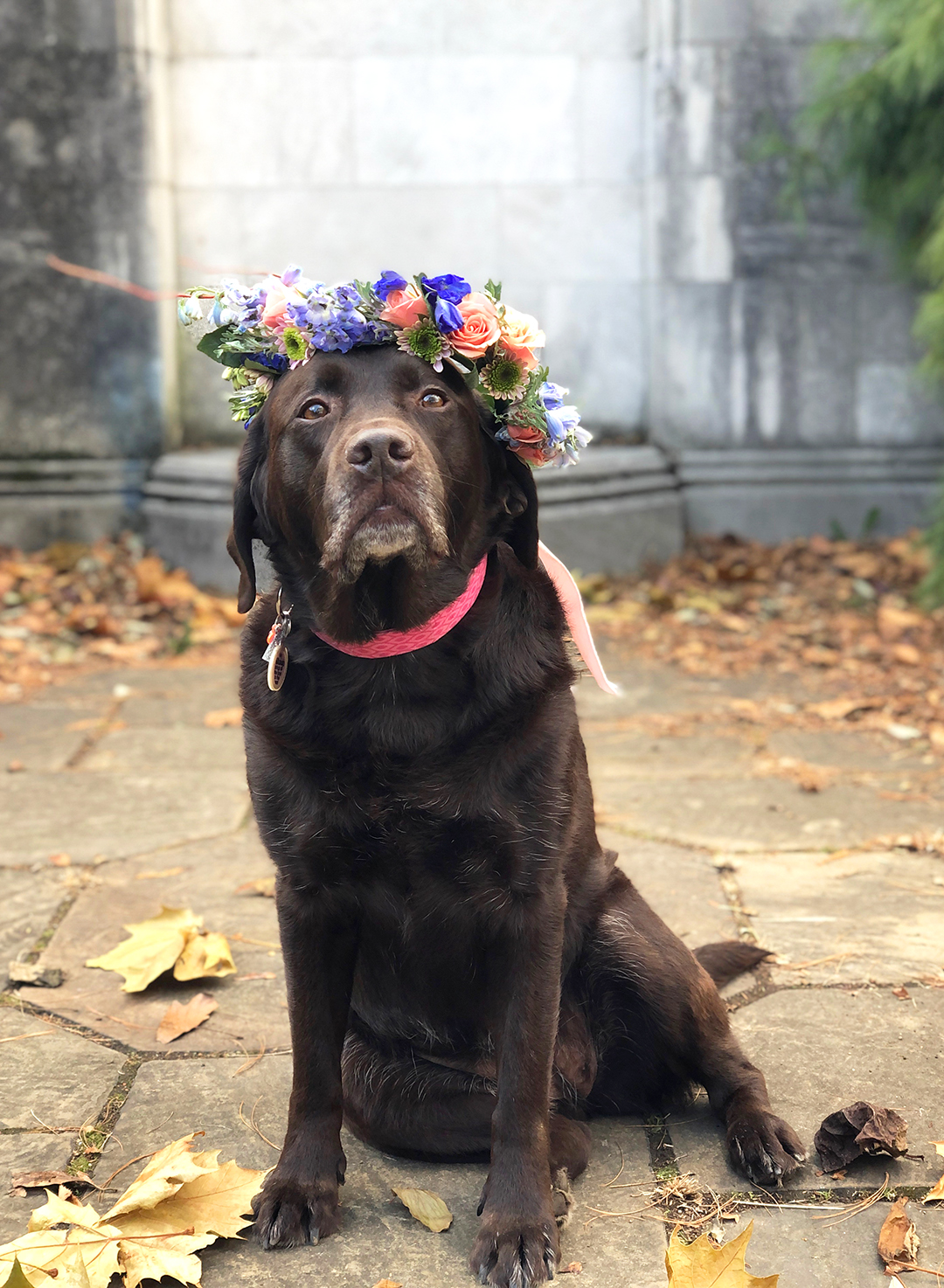 dog in a flower crown