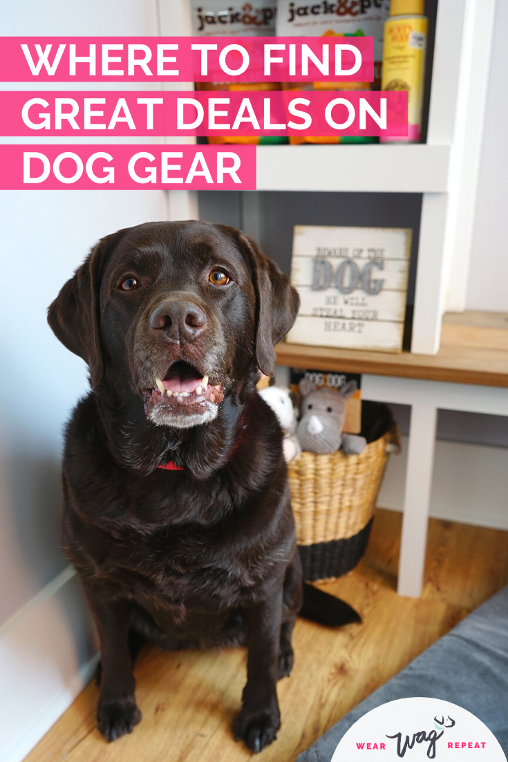 great deals on dog gear tuesday morning