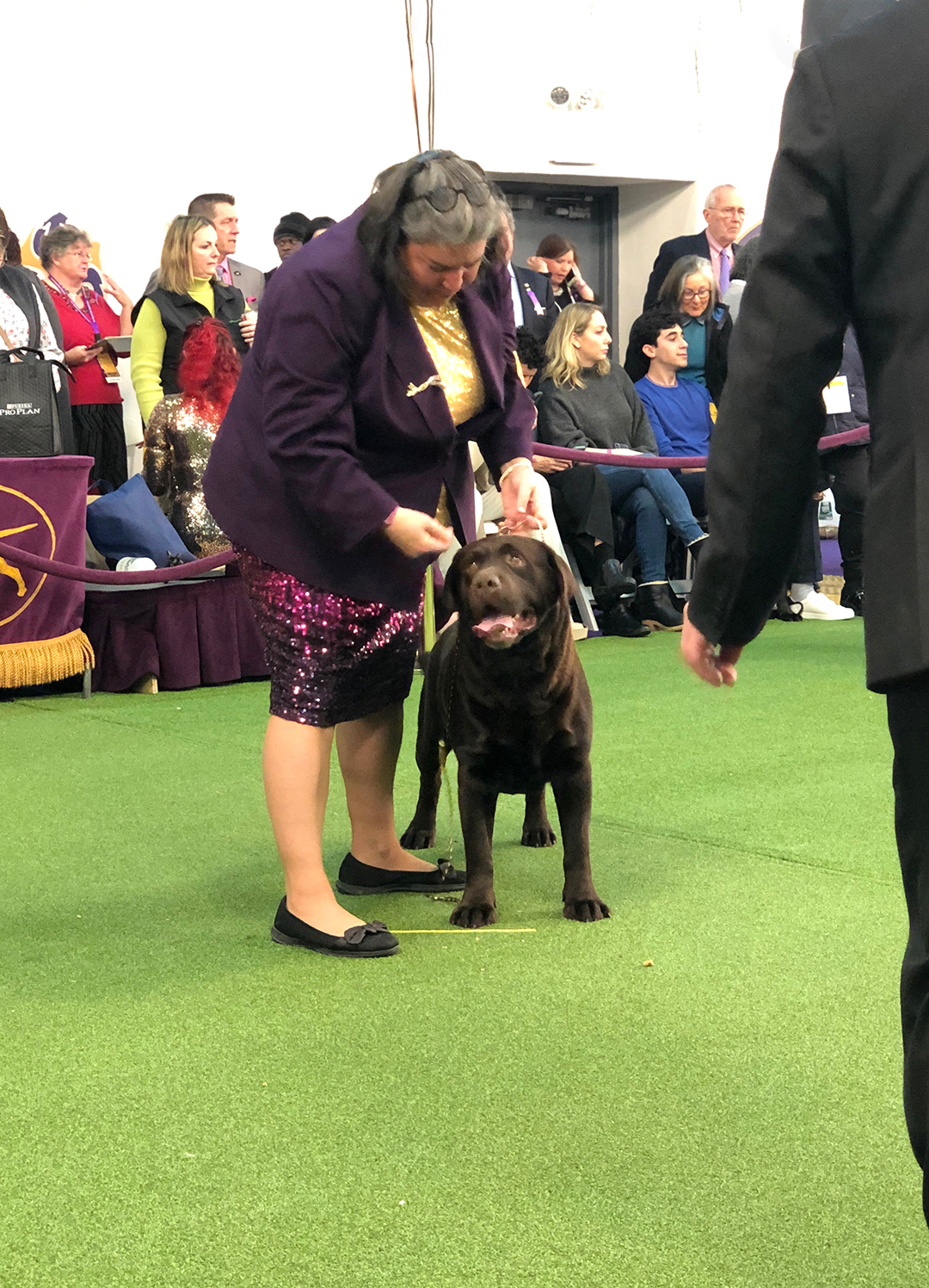 what questions should you ask a labrador breeder