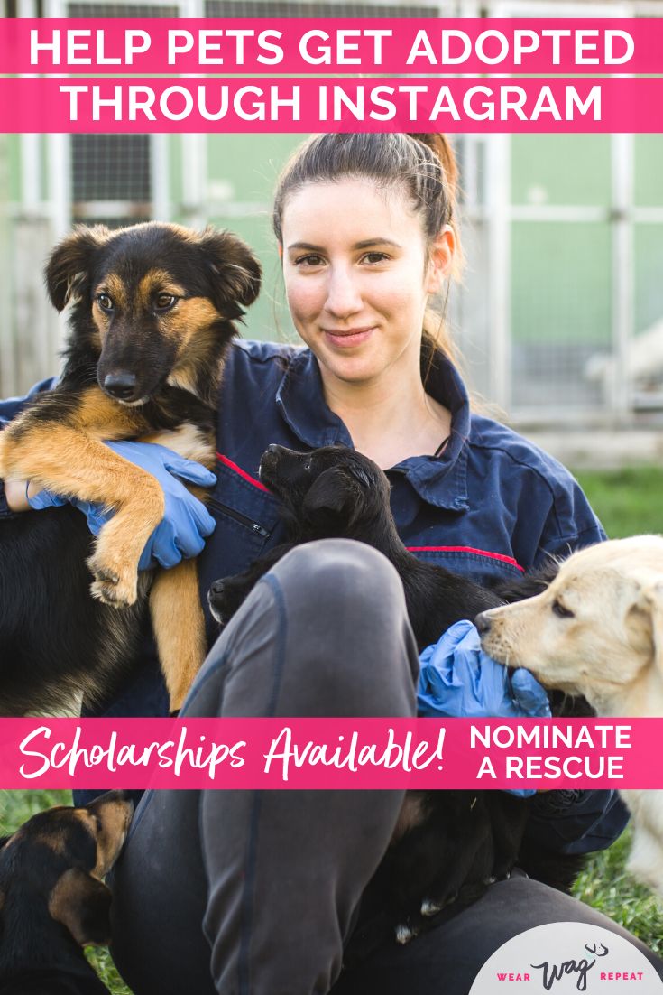 Nominate an Animal Rescue for an InSPO Scholarship