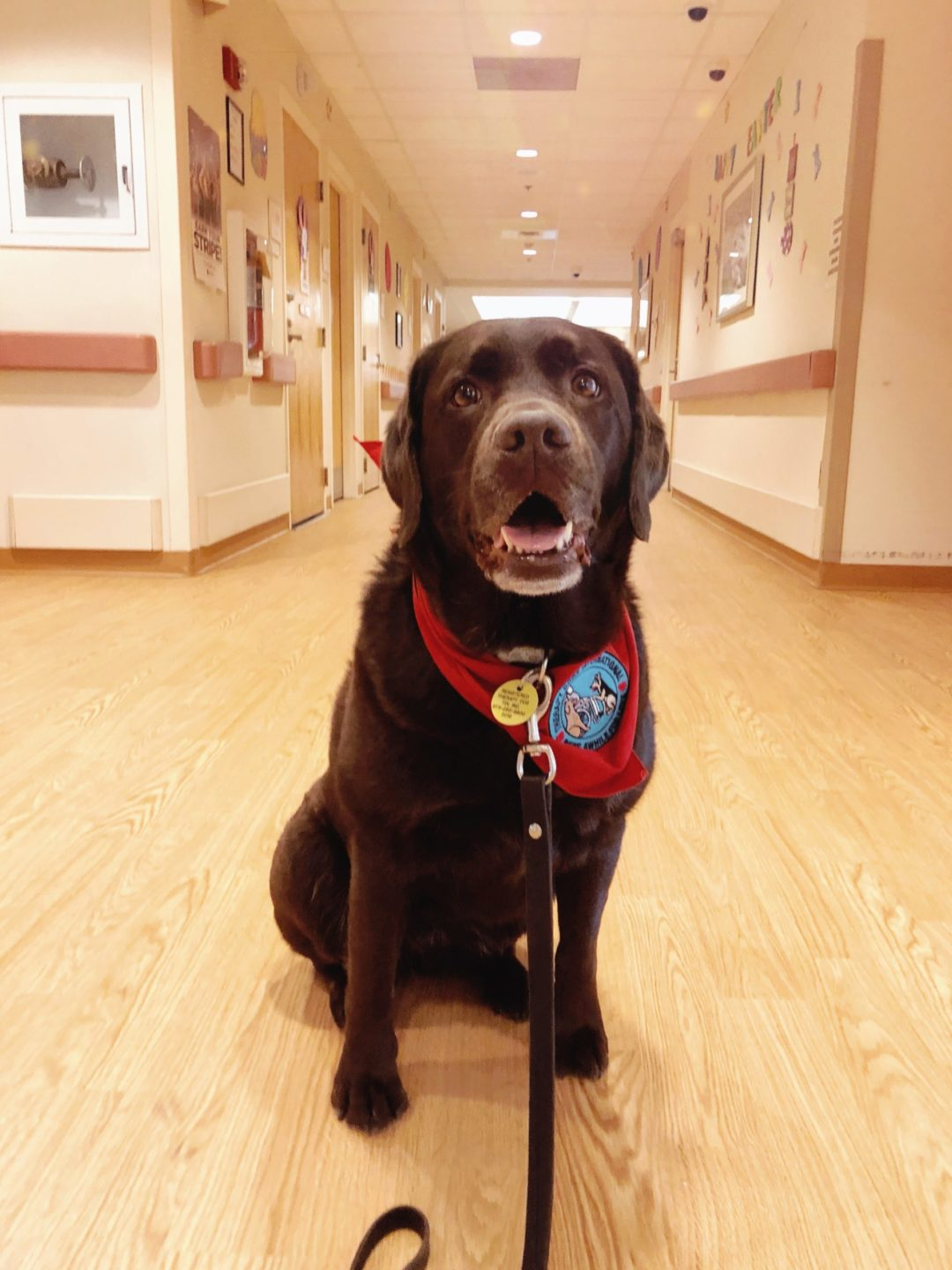 what happens during a therapy dog visit