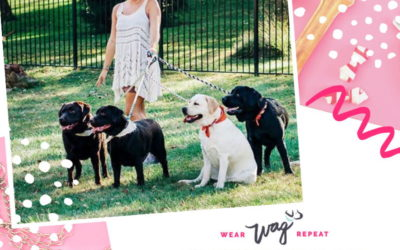 Podcast Episode 117: Breeding Your Show Dog Passion with Stephanie Wolfinger of Wolfpack Labradors