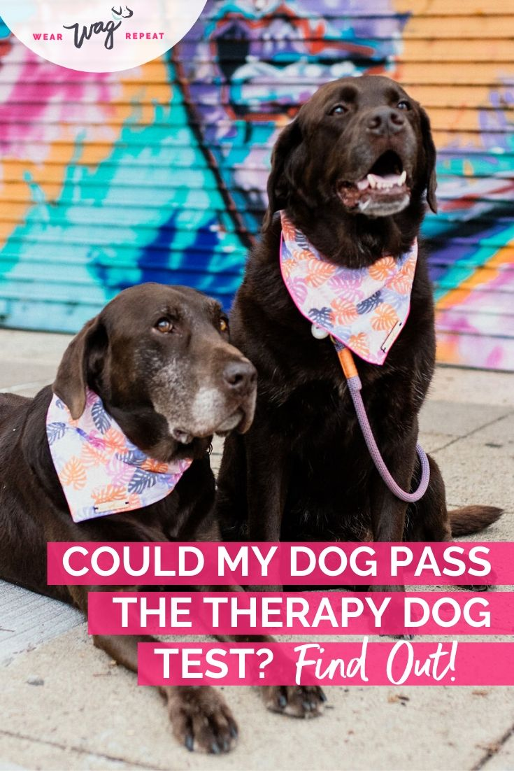 could my dog pass the therapy dog test