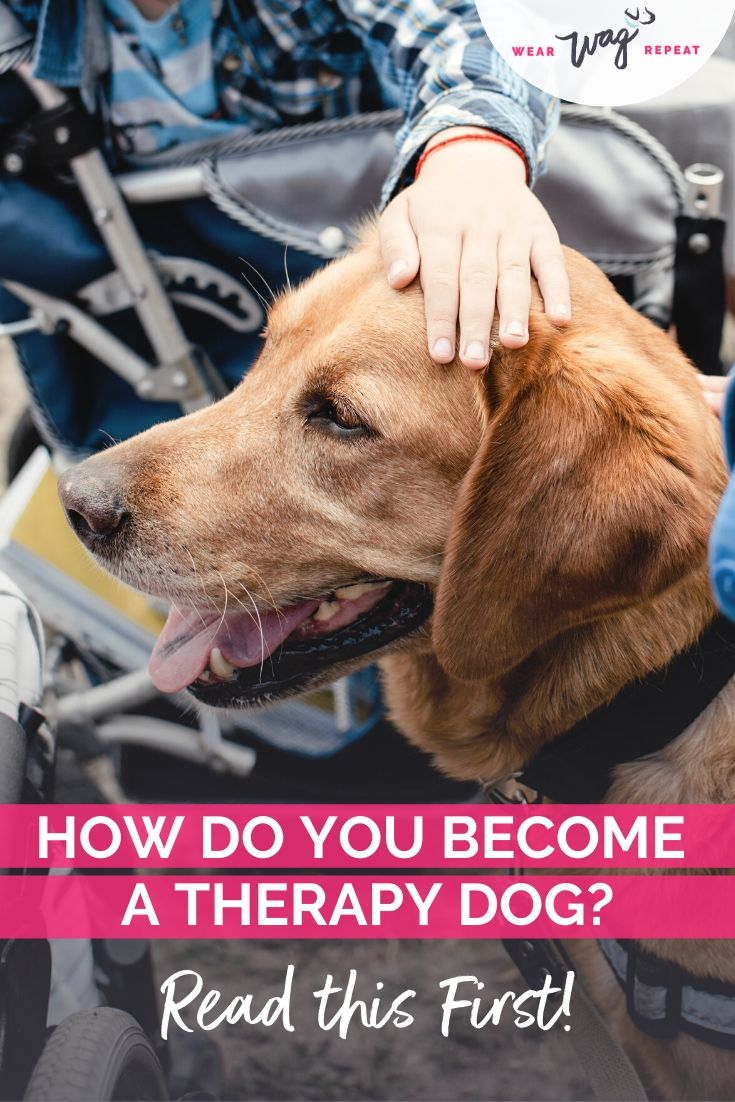 how do you become a therapy dog