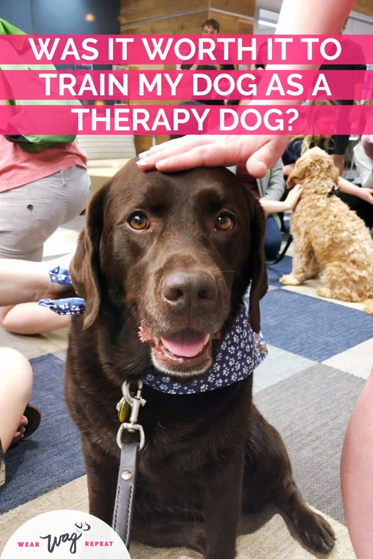 was it worth it to become a therapy dog