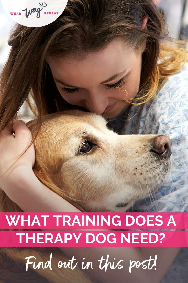 what training does a therapy dog need