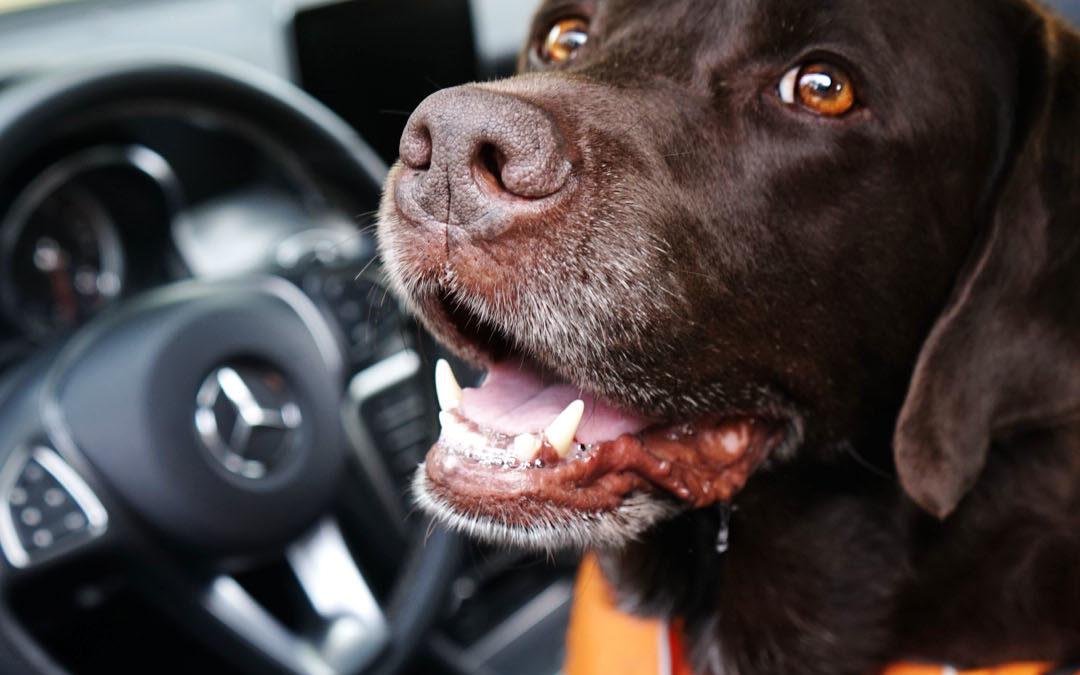 4 Essentials That Will Make Your Car More Dog Friendly