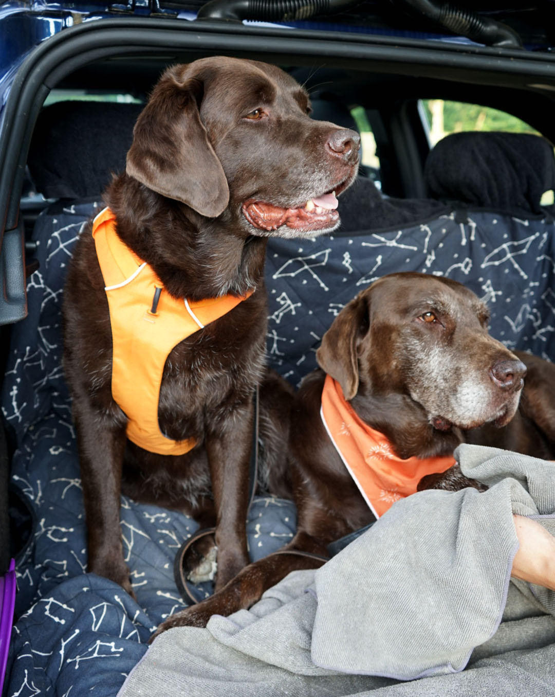 Add These 4 Essentials To Your Dog Car Kit