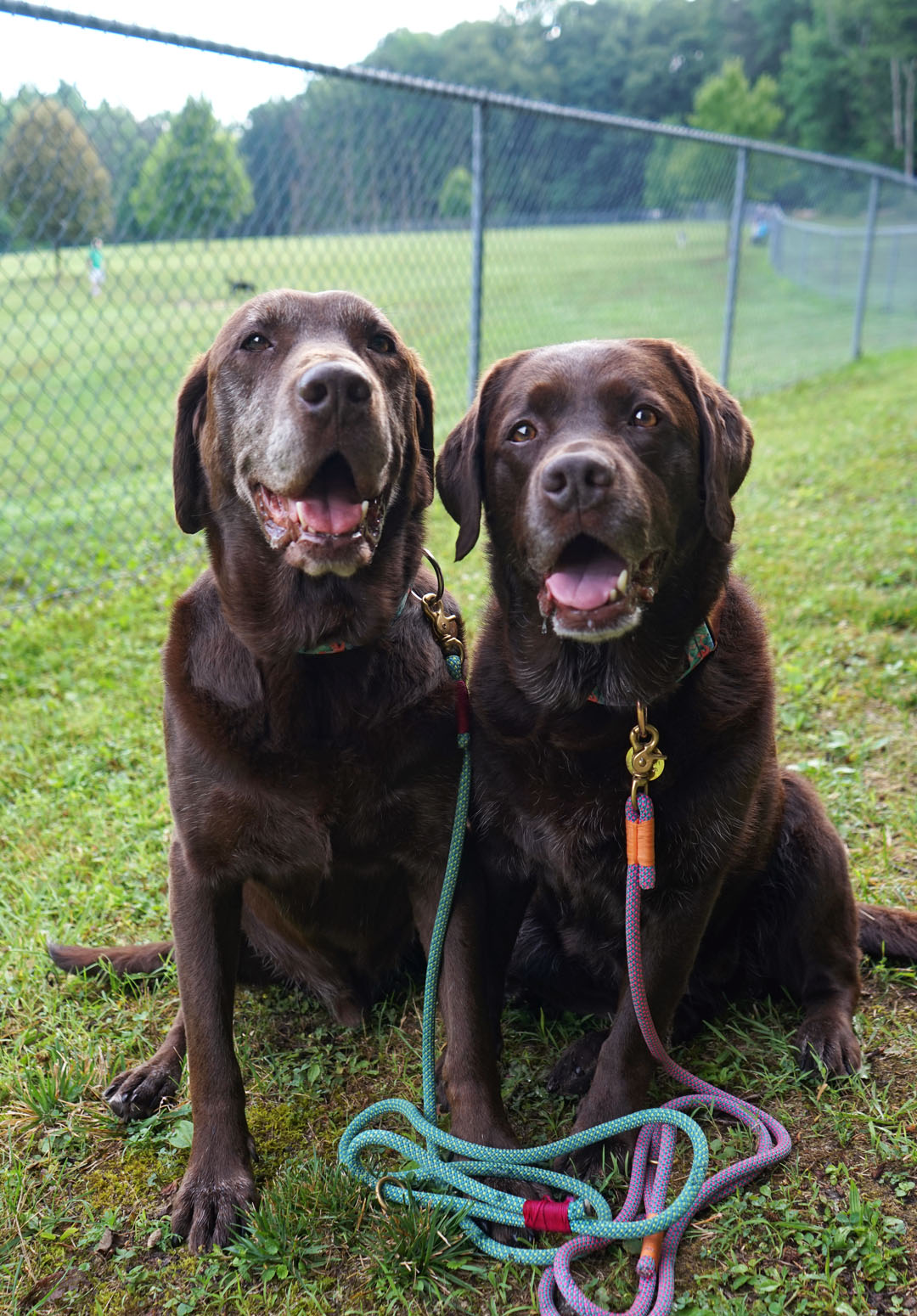 Prevent the spread of worms and parasites at the dog park