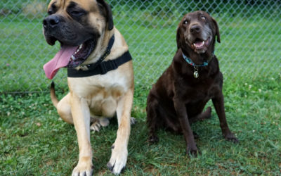 Could Your Dog Be Spreading Worms at the Dog Park?