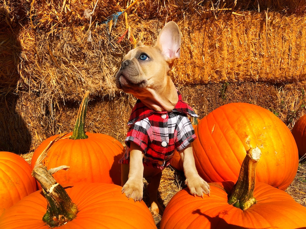 can you take your dog to pumpkin patches near pittsburgh