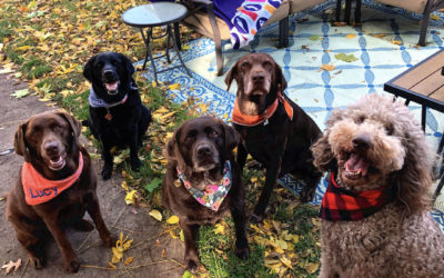 How to Host a Dogsgiving Celebration