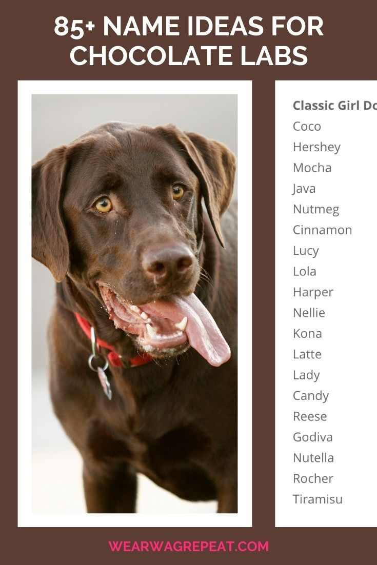 names for chocolate labs