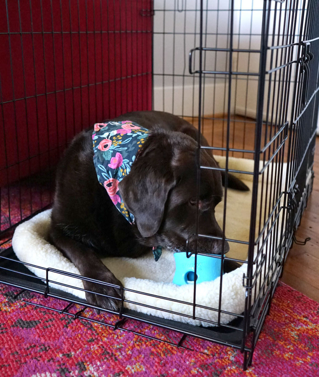 canine enrichment in crate