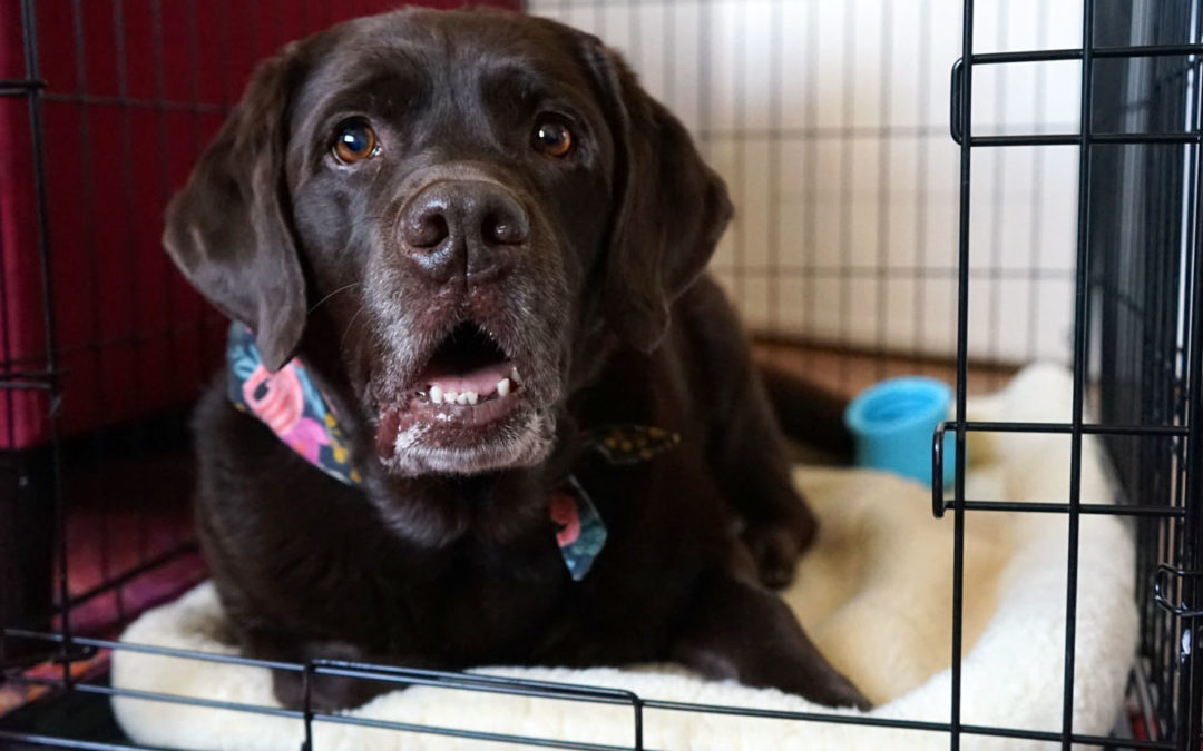 Keeping My Dogs Safe at Home: Pet Gate vs. Crate