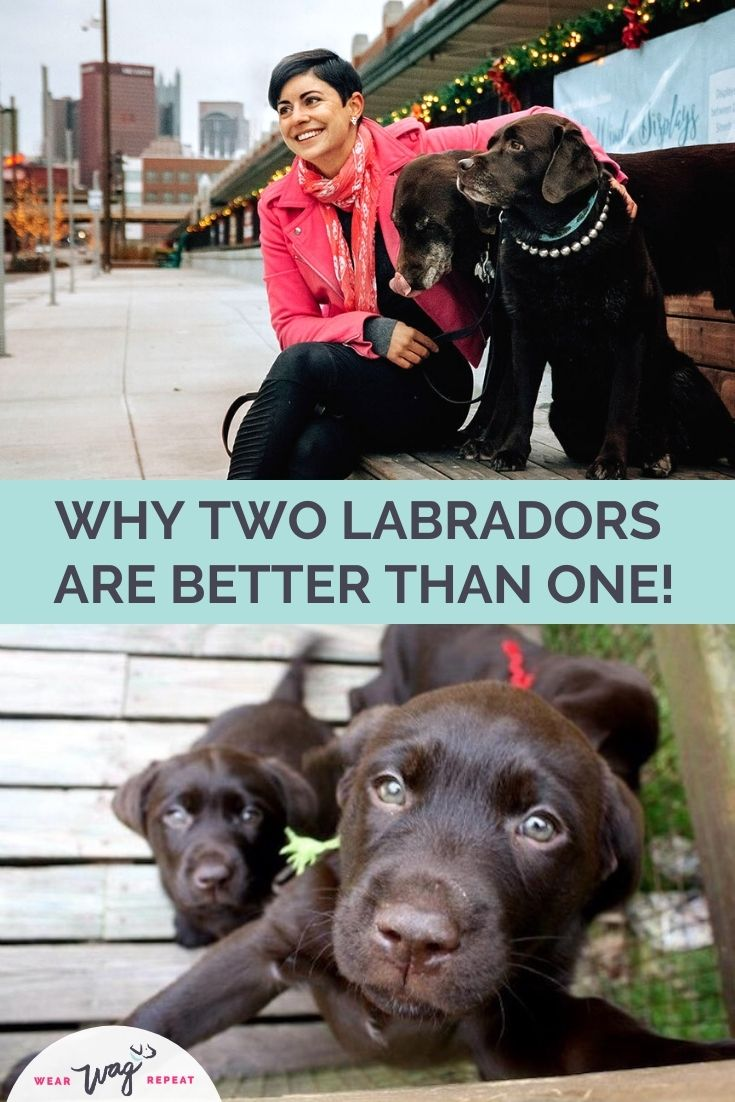 why two labs are better than one