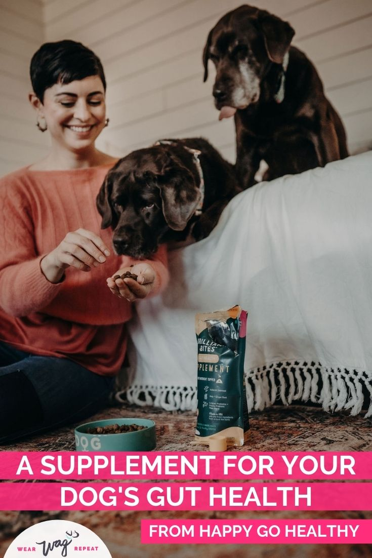 Supplement for your dog's gut health