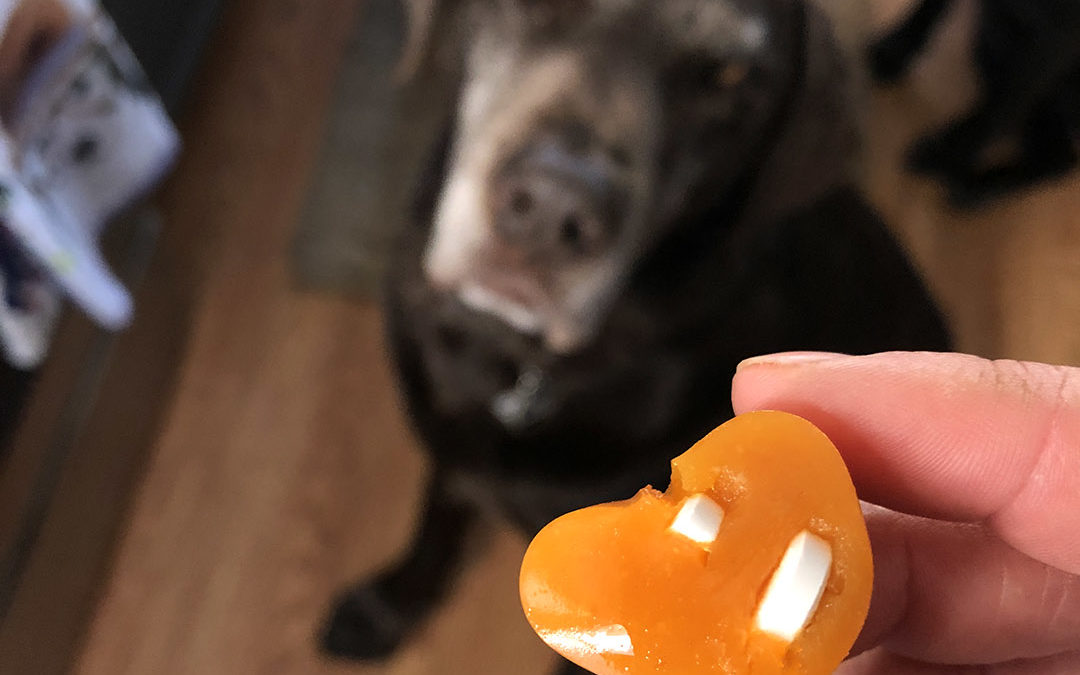 Easy Gelatin Dog Treat Recipe That's Perfect to Hide Pills