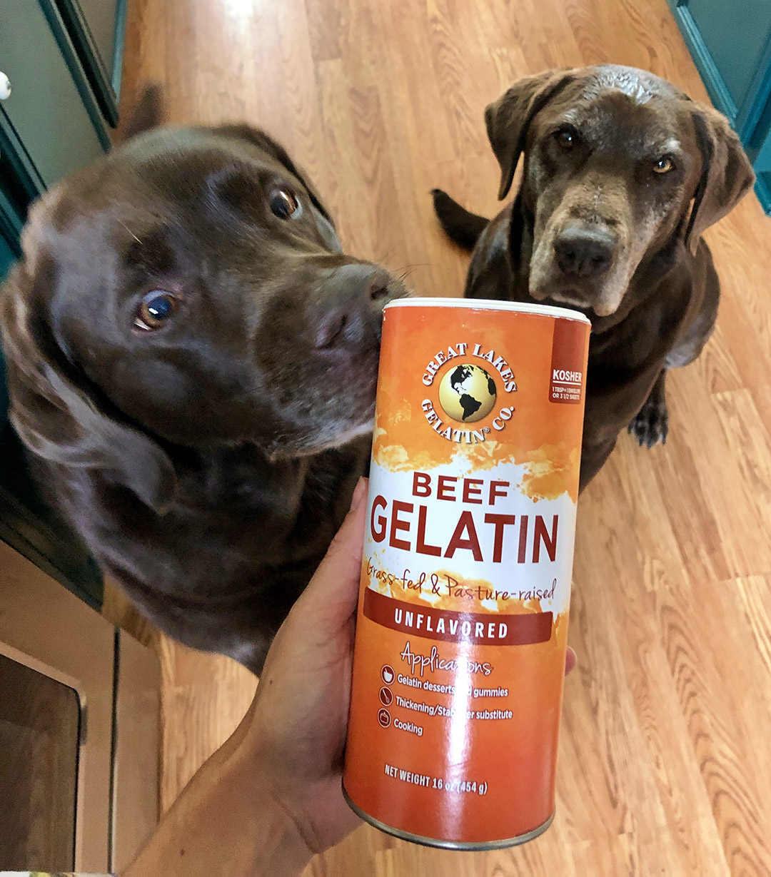 Great Lakes Gelatin for Dogs