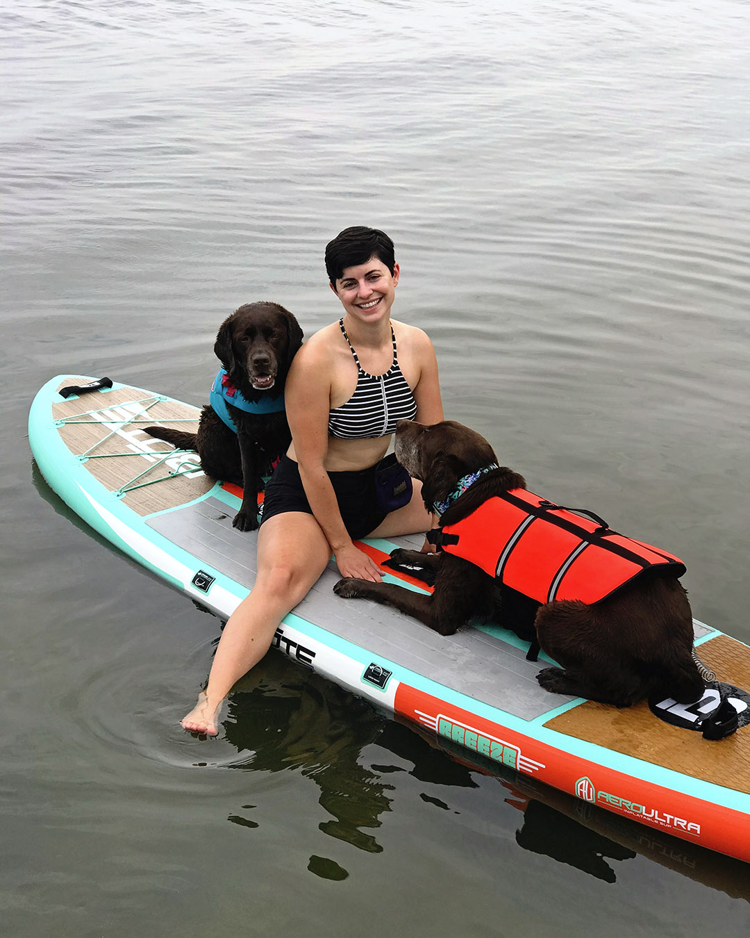 Paddleboard with labradors