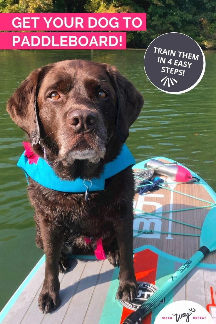 get your dog to paddleboard
