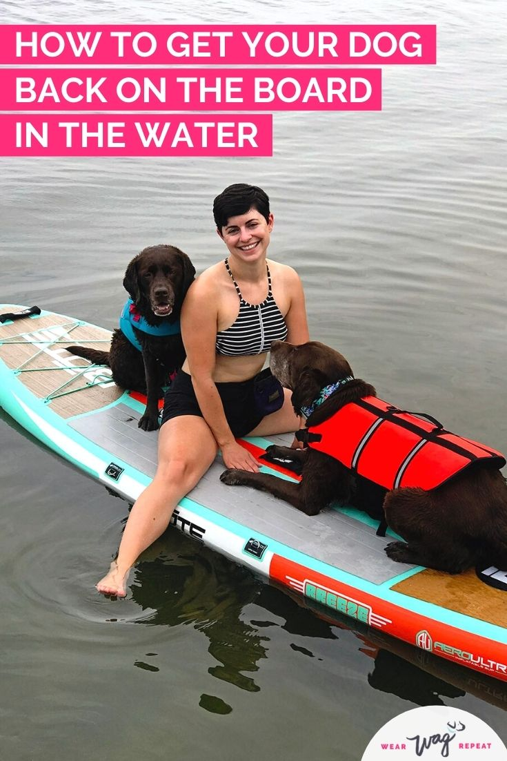 how to get your dog back on a paddle board