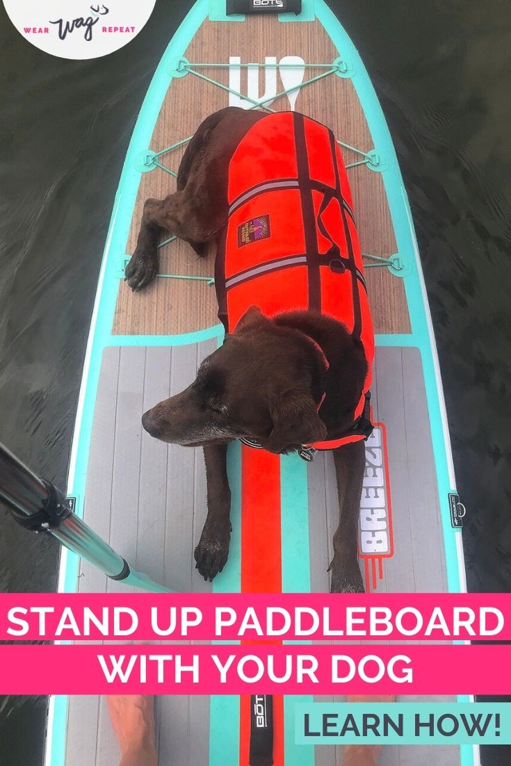 stand up paddleboard with your dog