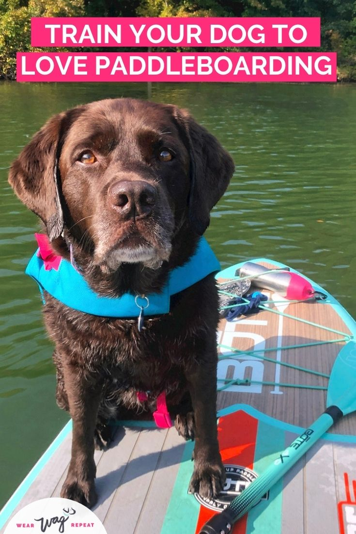 train your dog to love paddleboarding