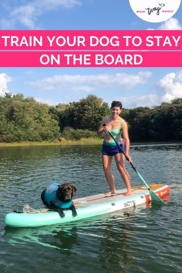 train your dog to paddleboard