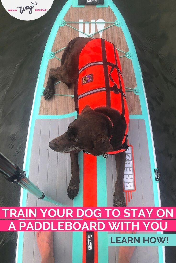 train your dog to stay on paddleboard with you