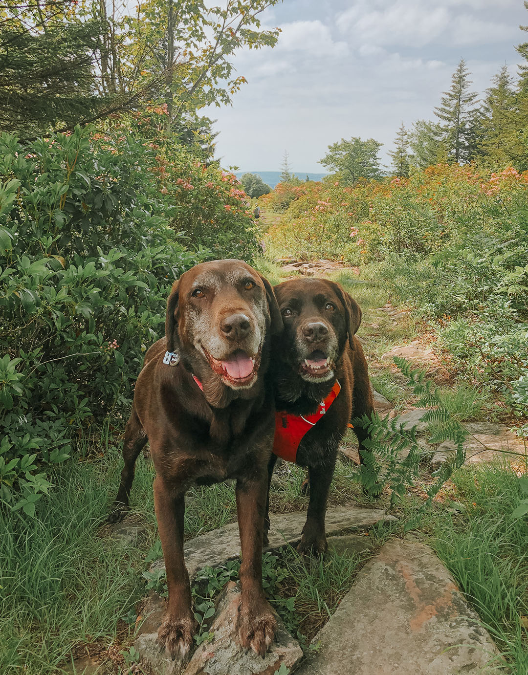 Blackbird Trail Dolly Sods with Dogs