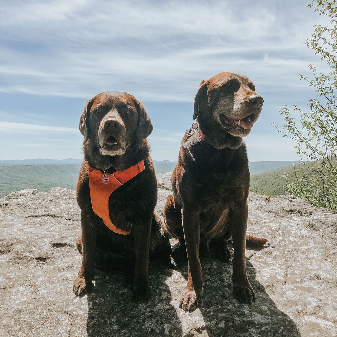 Eagle Rock West Virginia Hike with Dogs