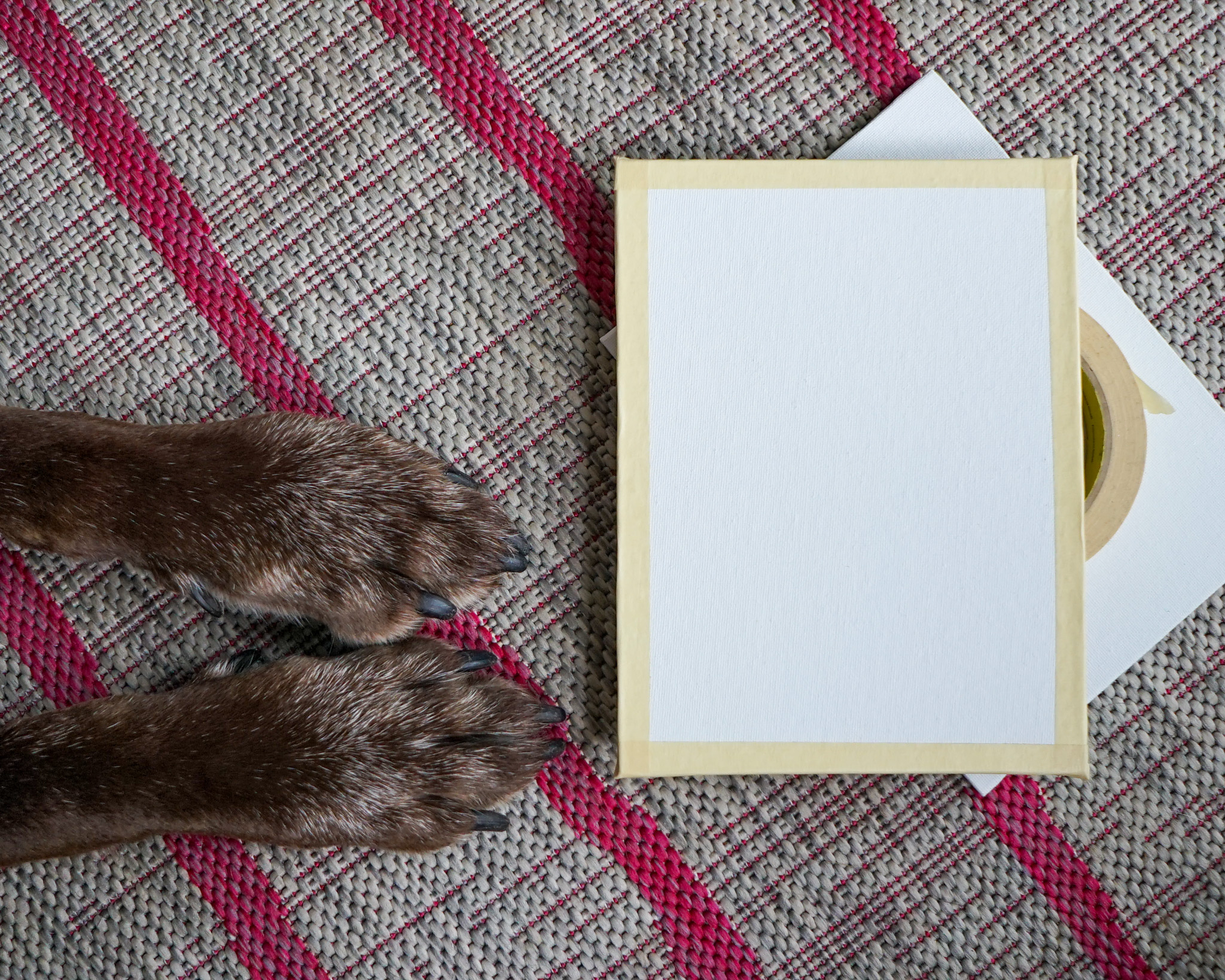 Instructions to paint with your dog